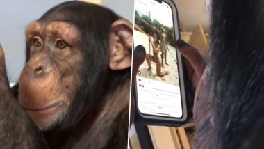 Chimpanzee Scrolling Through Instagram Feed Grabs Negative Reactions; Environmentalist Jane Goodall Disappointed (Watch Video)