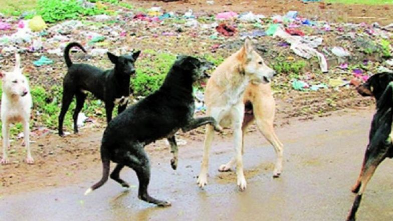 Bhopal Horror: 6-Year-Old Boy Killed by Stray of Dogs in Front of His Mother