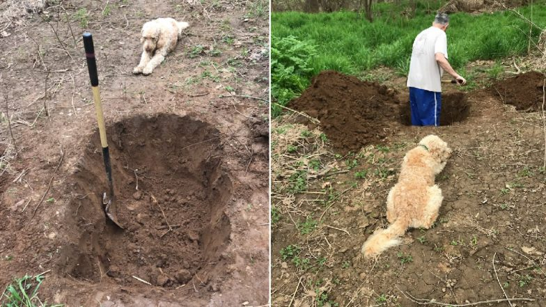 Heartbreaking Pictures of Man Digging a Grave for His Dog With the Pet Watching Go Viral; Here's the Truth Behind the Image