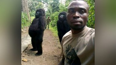 Gorilla Selfie Goes Viral After Endangered Apes from Virunga National Park, Congo Pose With Anti-Poaching Rangers