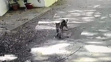 Leopard Cub, Seen Strolling Near a Housing Complex in Andheri, Rescued After Five Hours