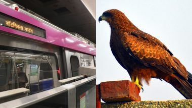 Bird Falls on Delhi Metro Tracks Due to Dehydration, Rescued