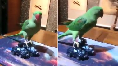 Ajay Devgn and Riteish Deshmukh are At it Again, This Time Their Funny Twitter Banter Involves a Parrot