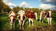 Himachal Pradesh CM Jai Ram Thakur Launches 'Assistance to 'Gaushala/Cow Sanctuary Scheme'