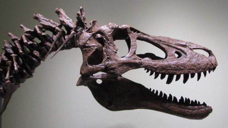 Fossil Hunter Tries to Sell Baby T-Rex Dinosaur Skeleton on eBay For Rs 20 crore And Palaeontologists Are Irked