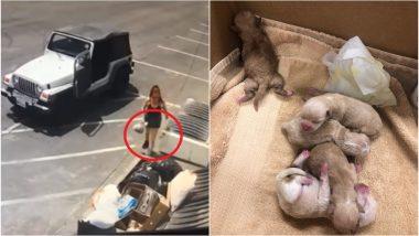 Woman Dumps 7 Newborn Puppies in Trash, Video From Coachella Goes Viral Angering Netizens (Watch Video)