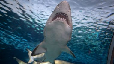 Shark Attacks Tourist Kayaking in Anaehoomalu Bay of Hawaii; Woman Hospitalised