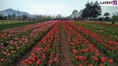 Tulip Garden in Kashmir Delights Tourists With Beautiful Blooms; Visitors Throng Srinagar As Tourist Season Begins (View Pics)