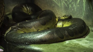Green Anaconda Snake Gives 'Virgin Birth' to 18 Snakes Despite Living in All FEMALE Company in New England Aquarium