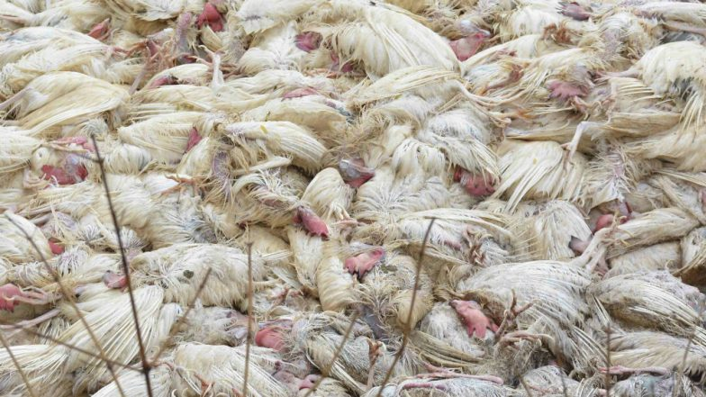 Bird Flu Erupts in Nepal, 21-Year-Old Youth Dead