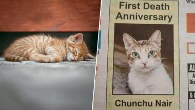 Pet Cat 'Chunchu Nair' Passes Away, Internet Hearts The Family's Gesture of Obituary Ad in Newspaper