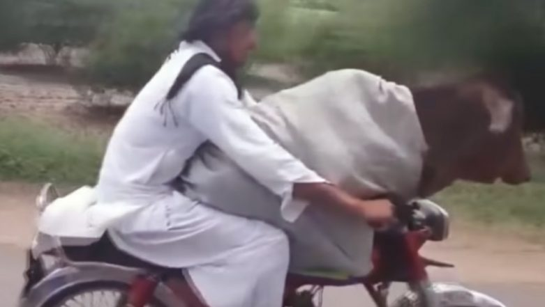 Man in Pakistan Rides a Bike With a Cow Sitting Calmly in Front, Watch Viral Video
