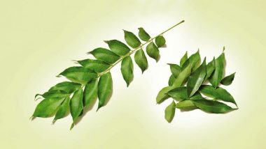 Ways To Use Curry Leaves Or Kadi Patta To Lose Weight