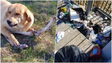Wild Bear Bribes a Pet Dog With Deer Bones To Eat Family's Trash in Ontario, Funny Tweet Goes Viral