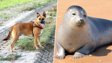 Dog Kills Rare Threatened Guadalupe Seal Pup on Northern California Beach