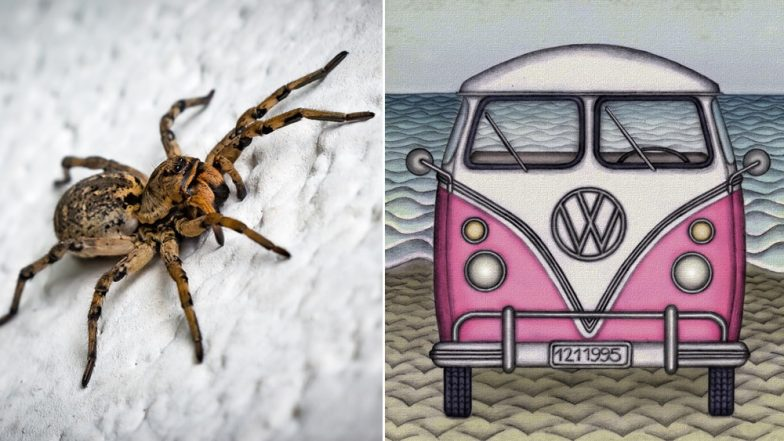Georgia Woman Jumps Out of Van As Spider Crawls Onto Her Lap, Vehicle Lands in River