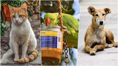 As Summer Temperatures Touch 40 Degrees, Here Are Some Ways to Take Care of The Stray Animals in Your Locality During Heatwave