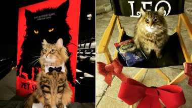 Leo, the Cat Who Played 'Church' in Pet Sematary Dies, Trainer Shares Picture of Cute Feline