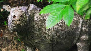 Malaysia's Last Male Sumatran Rhino Dies: Officials
