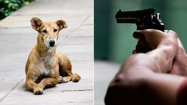 Malaysia's Ipoh City Hall Worker Shoots Stray Dog to Death, Horrific Video Goes Viral