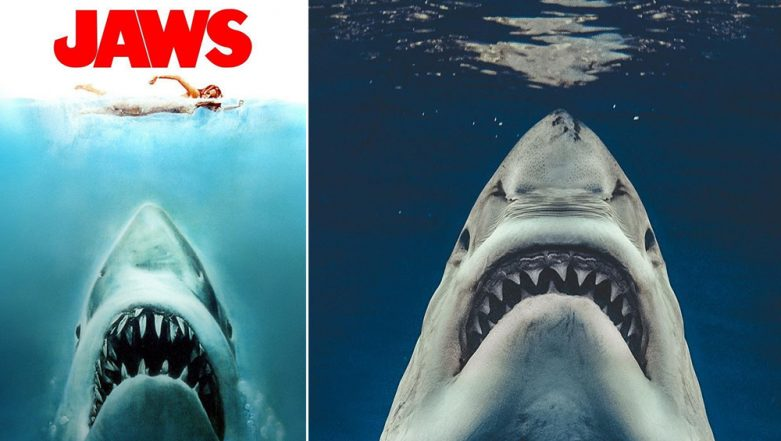 Photographer Captures Great White Shark off Mexico West Coast, Recreates Iconic 1975 Movie Jaws' Poster (See Picture)