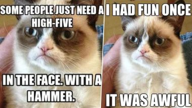 Grumpy Cat Dies at 7; Funniest Memes of the Angry-Faced Feline You Simply Can't Say NO to