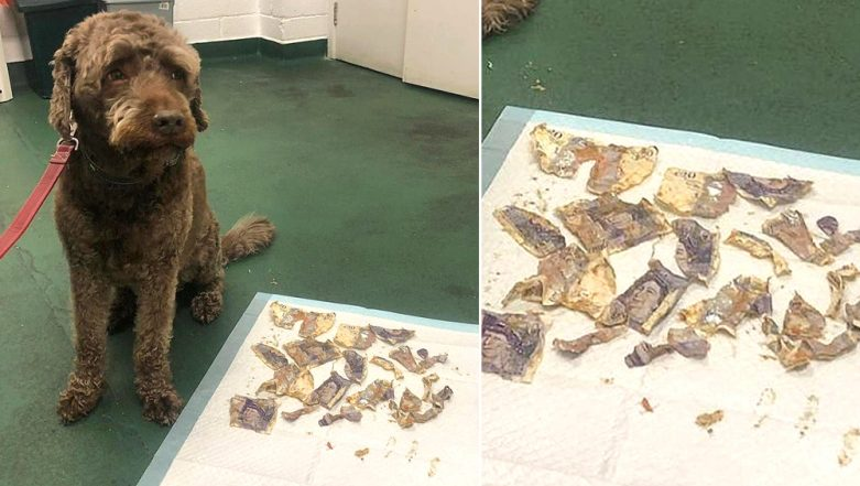 Pet Dog Eats  £160 Cash and Owners Spend £130 to The Vet to Recover it (View Pic)