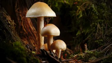 Weight Loss Tip of the Week: How to Use Shiitake Mushrooms to Lose Weight (Watch Video)