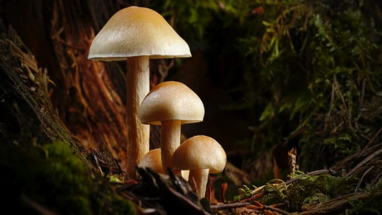 Breakthrough: Anti-Cancer Mushroom Patent Received by Madras University Professor for Compound From Fungi