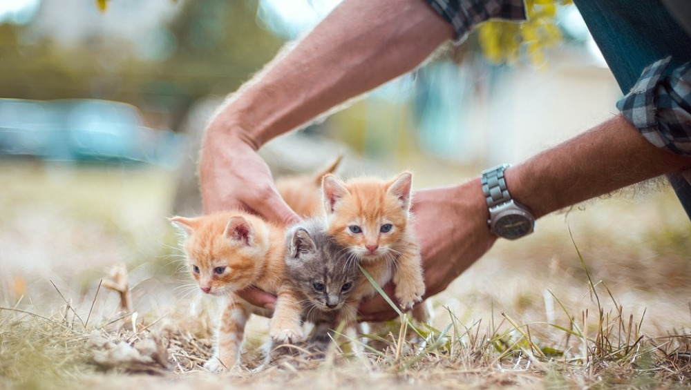 Cats Poisoning Case in Kolkata: Police Investigate After Dead Bodies of Several Cats Found in Jadavpur
