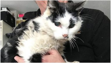 Pet Cat Who Went Missing for 9 Years in England Reunited With Owner at the Age of 20