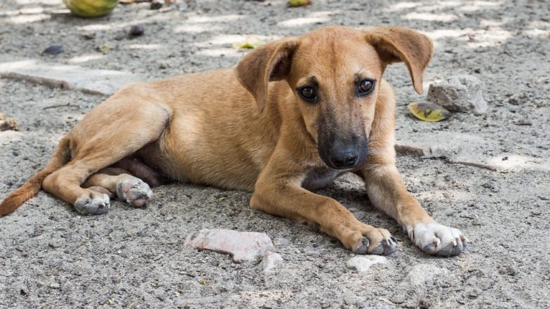 Mumbai Stray Dog Abuse: Canine's Eyeballs Damaged, Neck Twisted After Being Tied to a Vehicle and Dragged to Death