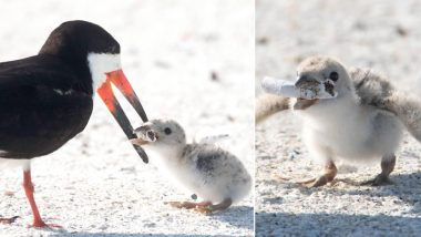 Mother Bird Feeds Her Chick a Discarded Cigarette Butt on Florida Beach, Disheartening Pic Highlights Issues of Littering