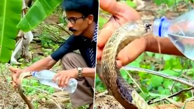 Cobra Drinks Water From Bottle! Video of Forest Official Comforting the Snake Goes Viral