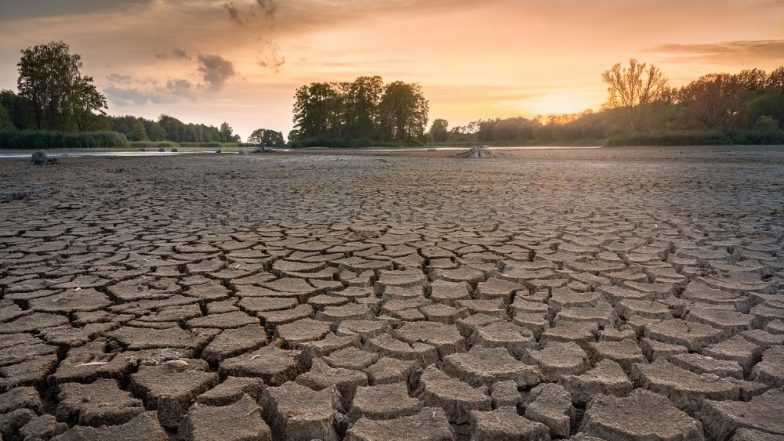 World Day to Combat Desertification and Drought 2019: Theme And Significance of the Observance That Raises Awareness on Protection of Land