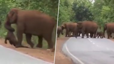 Elephants Carry Dead Body of Calf in Indian Forest, 'Funeral Procession' of Mourning Elephants Go Viral (Watch Video)