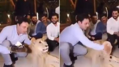 Lion's Face Smashed By Birthday Cake! Kurdish Man Abuses 'Pet' Animal, Apologises After Viral Video Sparks Outrage Online