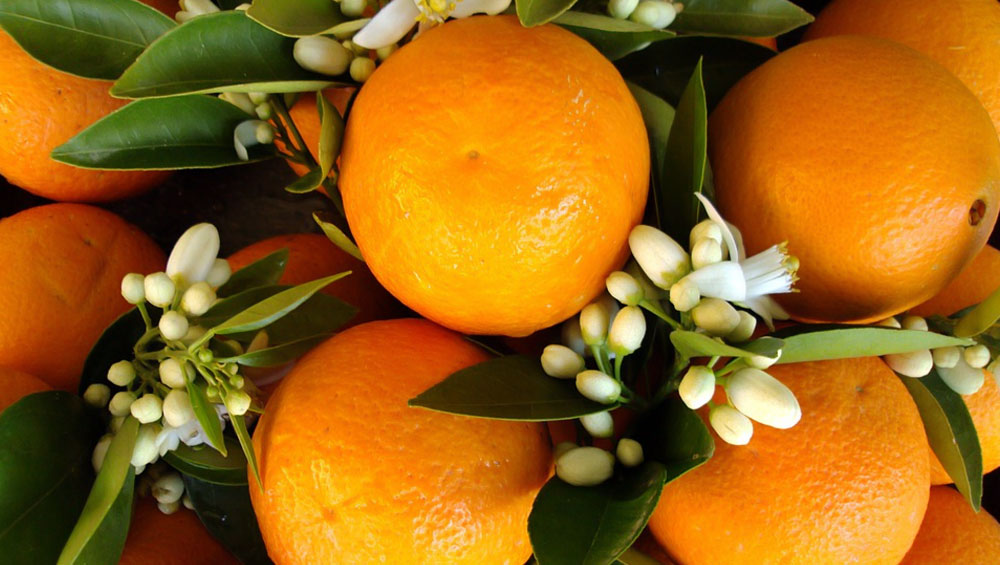 Your Ultimate Winter Fruit Guide: What You Must Eat To Stay Healthy This Season