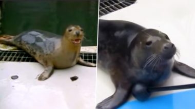 Grey Seals Sing 'Star Wars Theme' and 'Twinkle Twinkle' After Scientists Train Them, Watch Video