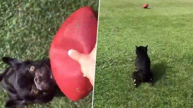 Beautiful Video of Dog Chasing a Ball Unaware of Its Paralysis Wins the Internet's Hearts
