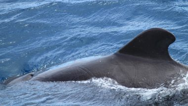 6 Endangered Right Whales Found Dead in Canadian Waters, One Died of Collision with Ship