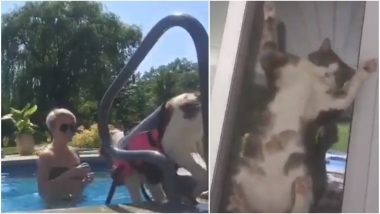 Pet Cat's Reaction on Woman Teaching Her Dog to Swim Has Left the Internet in Splits! (Watch Funny Video)
