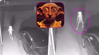 Dobby, the House Elf-Like Creature Spotted in a Driveway! Who Is Dobby? Watch Viral Video Which Has Left Every Potterhead Asking for More!