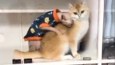 Viral Cat Video Is Inspiring Hilarious Memes, Check ROFL Tweets