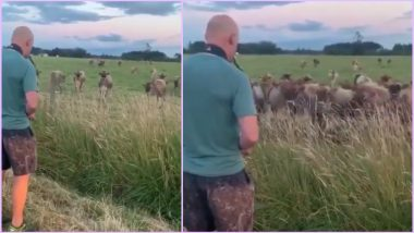 US Man Entertains Cows By Playing Saxophone in a Video That Went Viral