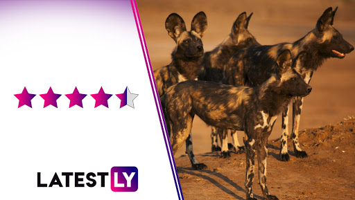 Dynasties Review: David Attenborough's Educative Narration on Endangered Wild-Life Is Matched With Aesthetic Visuals