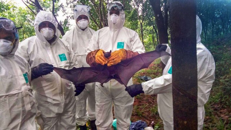 Nipah Scare in Kerala: Samples From 30 Bats and 3 Pigs From Thodupuzha Sent to NIV Pune for Tests
