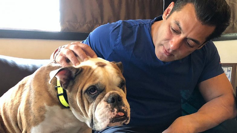 Salman Khan's Shares the Picture With His BullDog and We Can't Decide Who's Cuter
