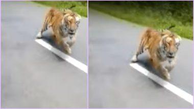 Tiger Chases Bikers in Kerala's Wayanad, Viral Video Scares Netizens