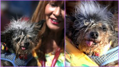 World's Ugliest Dog of 2019 Is Scamp the Tramp, View Adorable Pics of the Messy-Haired Toothless Canine Who Won the Contest